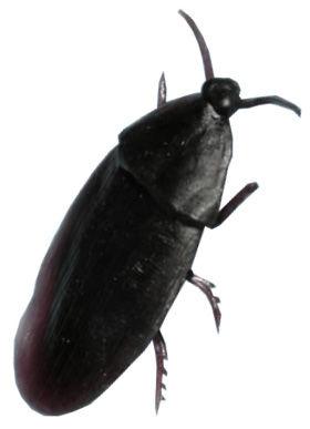 Gumový šváb 5cm 6 kusů